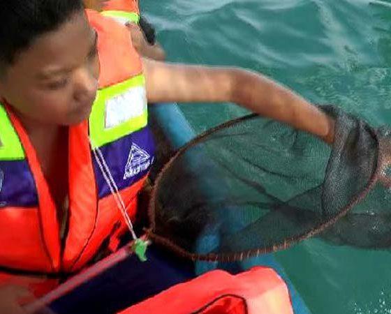 D'Karangtekok Situbondo, Wisata Edukasi Pungut Sampah, Petualang Susuri Mangrove