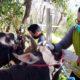 Petugas DPKH Kabupaten Situbondo saat melakukan inspeksi mendadak (Sidak) pemeriksaan hewan kurban di kawasan penyedia hewan kurban, Jum'at (24/07/2020) siang. (her/im)