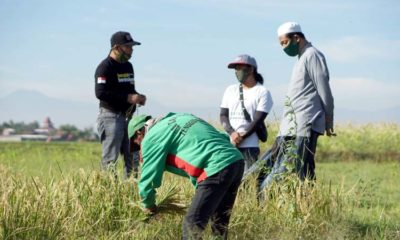 Generasi Milenial Situbondo Bertani Shorgum