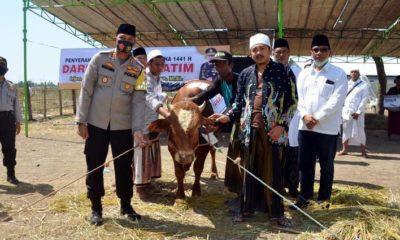 Kapolres Situbondo AKBP Sugandi SIK M Hum menyerahkan langsung hewan Kurban seekor sapi dari Kapolda Jatim kepada pengasuh Ponpes Walisongo Mimbaan KHR Mohammad Kholil As'ad Syamsul Arifin. (im)