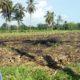 Sublok Diduga Pilih Kasih, Petani di Kecamatan Arjasa Situbondo Mengeluh
