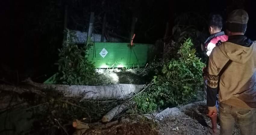 Kondisi truk yang ringsek setelah oleng dan menabrak pohon di pinggir jalan.